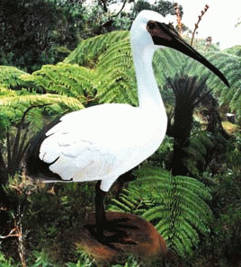 """Résultat de recherche d'images pour """"oiseau solitaire reunion"""""""